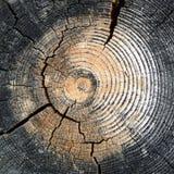Jag klippte ner ett träd Royaltyfri Fotografi