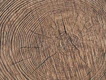 Jag klippte ner ett träd Royaltyfri Bild