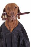 Jag `-ll är domaren av det Arkivbild