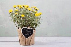 Jag missa dig - härliga blommor i kruka med meddelandekortet Royaltyfri Fotografi