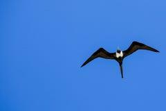 Jag ska flyga i den oändliga himlen Arkivfoton