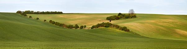 Jaga asken i gröna vårkullar Åkermarker i tjeckiska Moravia Royaltyfri Foto