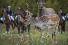 Jaga för hjortar arkivfoton