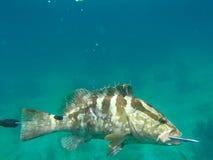 Jaga fisken royaltyfri fotografi