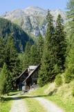 Jaga kojor i österrikiska fjällängar Arkivbilder