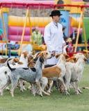 Jaga packen från Derwent hundar på landsshowen arkivfoton