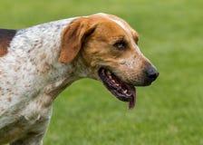 Jaga packen från Derwent hundar på landsshowen arkivbild