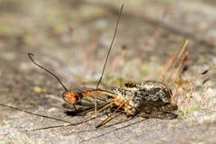 Jagd der springenden Spinne lizenzfreie stockfotografie