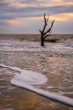 Jagd-Insel-Skeleton Baum 2 Lizenzfreie Stockbilder