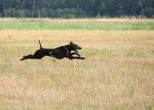 Jagd mit einem Hund Lizenzfreie Stockfotografie