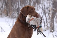 Jagdbegleiter Stockfoto