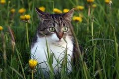 Jagden einer kleine Katze auf dem Gebiet lizenzfreie stockfotos