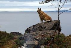 Jagdhund auf der Klippe durch das Meer Stockfoto