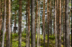 Jagdkontrollturm Lizenzfreies Stockbild