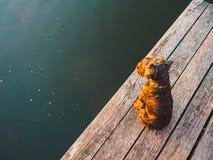 Jagdterrier που κάθεται στη γέφυρα στοκ εικόνα