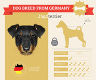 Jagdterrier dog breed  infographics Stock Photo