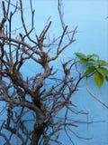Jagen der Natur durch drywoods Niederlassungen Stockbilder