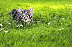 Jagend katje stock foto