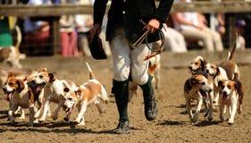 Jagende honden Stock Foto's