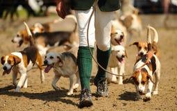 Jagende honden Stock Afbeeldingen