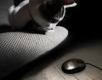 Jagende kat stock foto