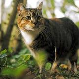 Jagende Kat Stock Foto's