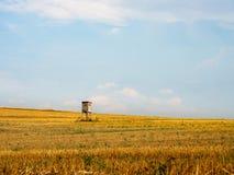 Jagers` s toppositie op een open gebied van warm, gouden gras royalty-vrije stock afbeelding