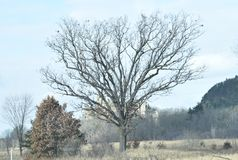 Jagged Old Tree Outside Mill Bluff State Park Royalty Free Stock Photography