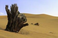Tree stump in the desert Stock Images