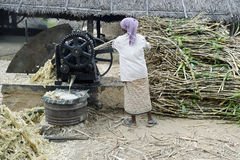 Jaggery-sugarcane and extracting juice Stock Image