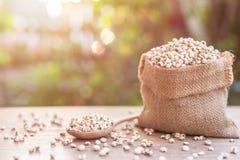 Jaglany ryż lub jagła groszkujemy w małym worku na drewnianym stole Fotografia Stock
