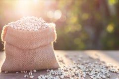 Jaglany ryż lub jagła groszkujemy w małym worku na drewnianym stole Obrazy Stock