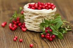 Jagod cranberries w łozinowym koszu na drewnianym tle Zdjęcia Stock