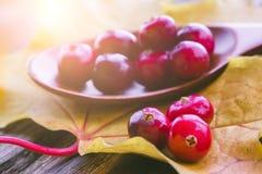 Jagod cranberries z płytką głębią pole Zdjęcia Stock