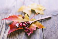 Jagod cranberries z płytką głębią pole Obraz Royalty Free