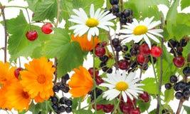 jagod kwiatu mieszanka Obrazy Royalty Free