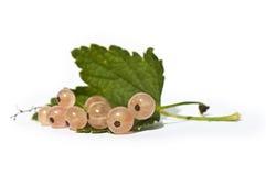 jagoda liść porzeczkowy świeży Obraz Stock