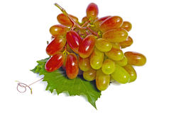 jagoda winograd Zdjęcia Royalty Free