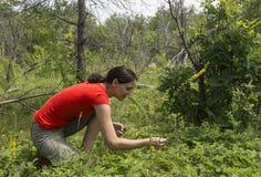 Jagodowa łąka Zdjęcia Royalty Free
