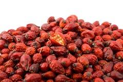 jagodowa czerwień Zdjęcie Royalty Free