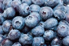 jagodowe obrazy stock