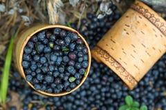 Jagodowe czarne jagody w drewnianym pudełku tuesok przeciw lasowemu tłu Obraz Stock