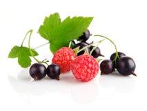 jagodowi świezi owoc zieleni liść obraz royalty free