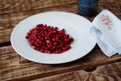 Jagodowi dojrzali cranberries Zdjęcia Stock