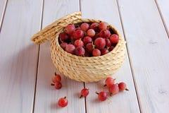 jagodowy agrest w małym koszu Obrazy Royalty Free