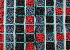 jagodowy blask obraz royalty free