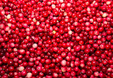 Jagodowy Cranberry Obrazy Stock