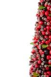 jagodowy drzewo Fotografia Stock