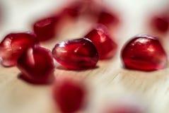 Jagodowy granatowiec makro- Zdjęcie Royalty Free