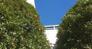 Jagodowy niebieskie niebo Zdjęcie Royalty Free